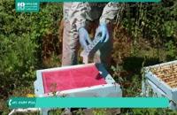 تولید گرده از زنبوران عسل