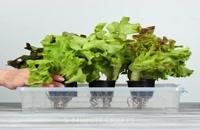 ترفند ساده گیاهی برای باغ شما