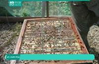 آموزش کامل زنبورداری نوین