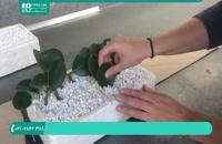 پرورش گل و گیاه | قلمه زدن و کاشت قلمه در خاک کوکوپیت