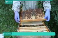 علامت گذاری ملکه در زنبورداری نوین - قسمت 3