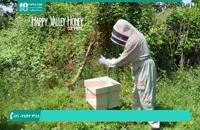 منابع آموزش زنبورداری و پرورش زنبور عسل