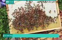 آموزش زنبورداری پیشرفته   118فایل