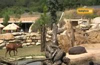 باغ وحش پراگ زیستگاه جانورانی که دوستشان داریم - بوکینگ پرشیا