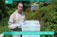 آموزش زنبورداری نوین