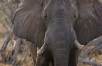 مستند فیل دوبله فارسی