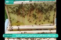 آموزش زنبورداری برسی های هفتگی ضروری
