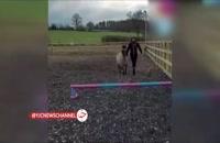 اسب سواری جالب یک سگ