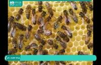 آموزش زنبورداری - آپدیت دسته با تکان دادن