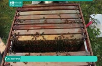 آموزش 0 تا 100 زنبورداری _ www.118file.com