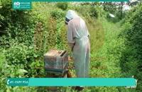 نکات مهم آموزش زنبورداری و پرورش زنبور عسل