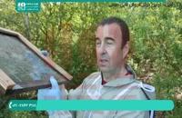 آموزش زنبورداری پرورش ملکه زنبور عسل قسمت 2