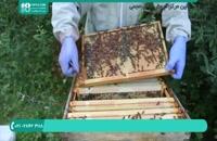 آموزش زنبورداری و شناخت ملکه زنبور عسل-قسمت 2