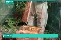 پرورش و نگهداری زنبورداری|مشکل لرزیدن زنبورها