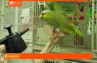 فیلم آموزش تربیت طوطی | اهلی کردن طوطی ( بهداشت طوطی ها )