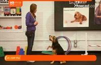 نکات مهم در رابطه با رفتار های غریزی سگ