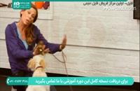 آموزش روشی صحیح برای تربیت سگ خانگی