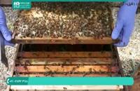 آموزش زنبورداری رایگان _ 118فایل|09130919448 .