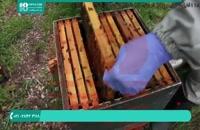 جدیدترین روش مصنوعی ایجاد یک دسته جدید در زنبورداری ایرانی