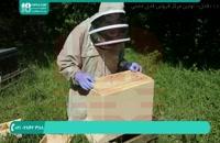 آموزش زنبورداری مبتدی تا حرفه ای در سراسر ایران