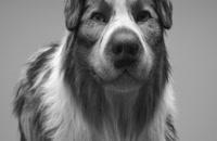 آموزش مدلسازی سگ با XGen