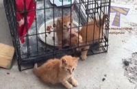 خنده دارترین کلیپ گربه ها