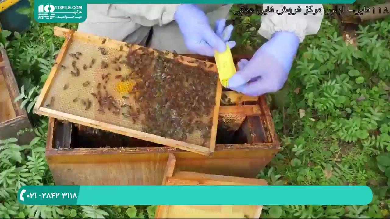 راه کسب درآمد از پرورش زنبور عسل و ژل رویال