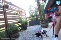 آموزش تربیت سگ (بخش سوم)