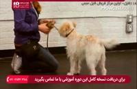 آموزش بهترین روش برای تربیت سگ خانگی