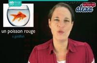 جامع ترین آموزش اسم حیوانات خانگی به زبان فرانسه