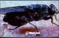 جاندارانی که حتی لمس کردن آنها میتواند موجب مرگتان شود