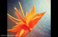 آموزش تزیین  هویج به شکل پروانه