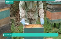 آموزش راه اندازی زنبورداری به صورت قدم به قدم