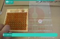 آموزش پرورش ملکه زنبور عسل به روش مصنوعی
