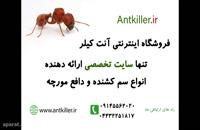 مورچه ها و زندگی آن ها را بهتر بشناسید