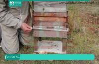 حصار و حفاظ برای کندو زنبور عسل