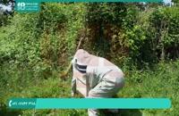 فیلم آموزش تکانی در زنبورداری نوین
