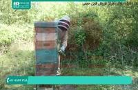 آموزش زنبورداری مدرن - مرتب سازی کندو های چند طبقه و بزرگ