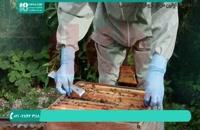 علائم بیماری فلج زنبوری در زنبورداری مردن