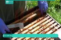 کاملترین آموزش زنبورداری از 0 تا 100