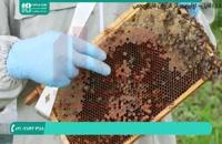 آموزش زنبورداری حرفه ای - 118فایل|09130919448