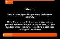آموزش تربیت طوطی - حرف زدن طوطی