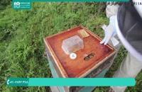 آموزش زنبورداری و پرورش زنبور عسل به سبک آلمانی