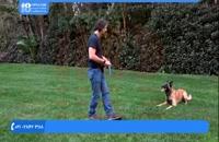 روش تشویق کردن سگ خانگی در حین تربیت و آموزش