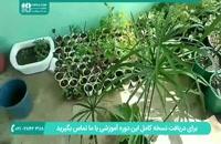 آموزش و پرورش گل و گیاه | گیاه پاپیروس