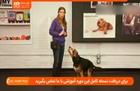 کنترل رفتارهای نامناسب سگ با آموزش فرمان نشستن