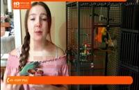 آموزش تربیت طوطی - چگونه پرنده را در غیاب خود سرگرم کنیم