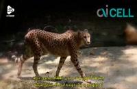 معرفی سریع ترین حیوانات دنیا