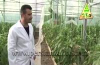 نقش ارتفاع بلند در تهویه گلخانه - شرکت کشاورزی حاتم
