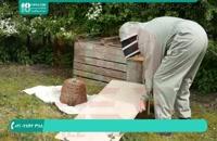 کاملترین پکیج آموزش زنبورداری در ایران